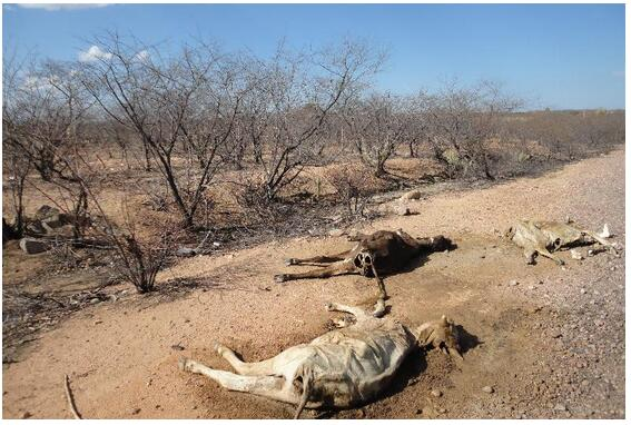 The Drought Industry in Northeast Brazil